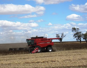 Harvesting in Horsham - Phillips Agribusiness